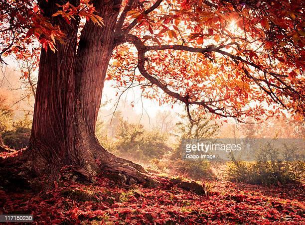 Herbst Schönheit