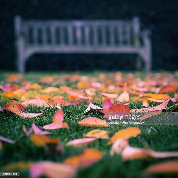 Autumn Bench, Kew
