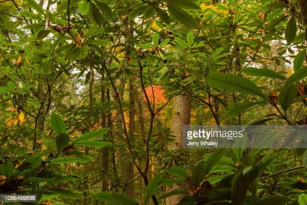 Autumn, Big Creek, Great Smoky Mountains