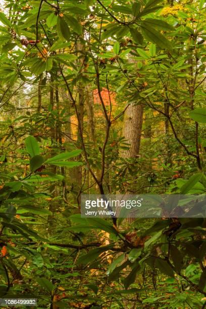 Autumn, Big Creek