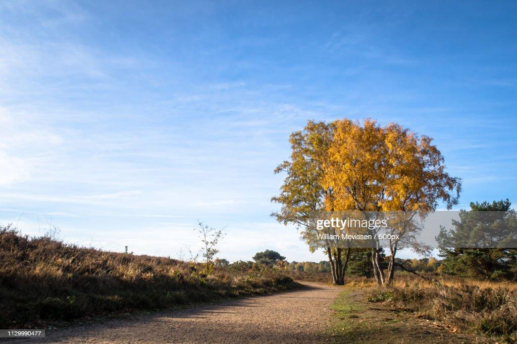 Autumn Birches Het Eendenmeer : Stockfoto