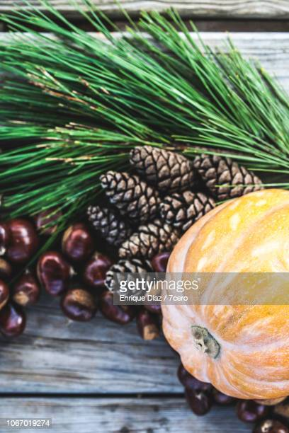 autumn bounty of chestnuts, pine cones and a pumpkin - harvest festival stock pictures, royalty-free photos & images