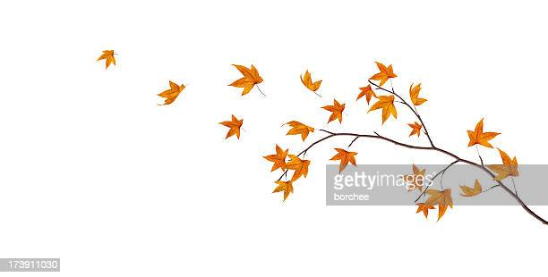 autumn branch - autumn falls stock pictures, royalty-free photos & images