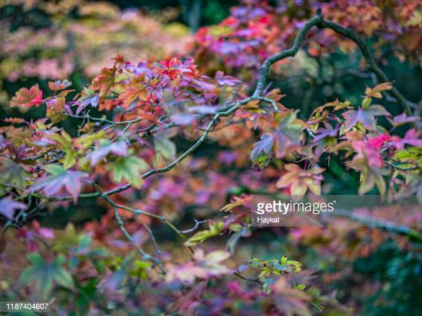 autumn branches - tetbury stock pictures, royalty-free photos & images