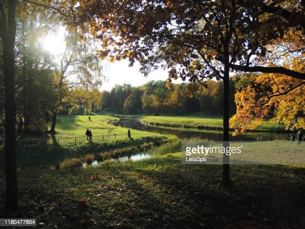 autumn bright landscape. view of the river through bright yellow trees, illuminated by the sun. - bicolore colore foto e immagini stock