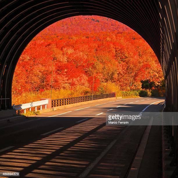 Autumn burns red
