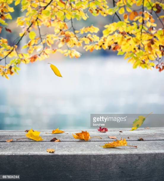 autumn by the lake - autumn falls stock pictures, royalty-free photos & images