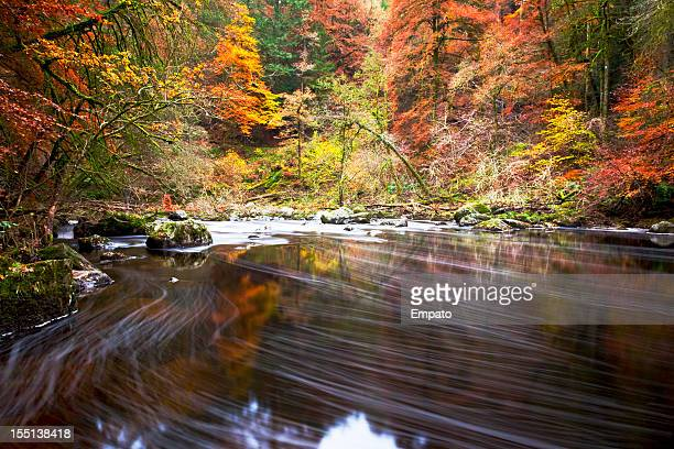 autumn by the river braan, dunkeld. - perth scotland stock pictures, royalty-free photos & images