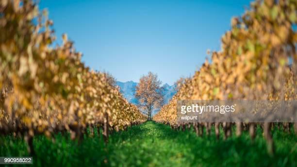 Automne Cape Winelands scène un arbre panoramique