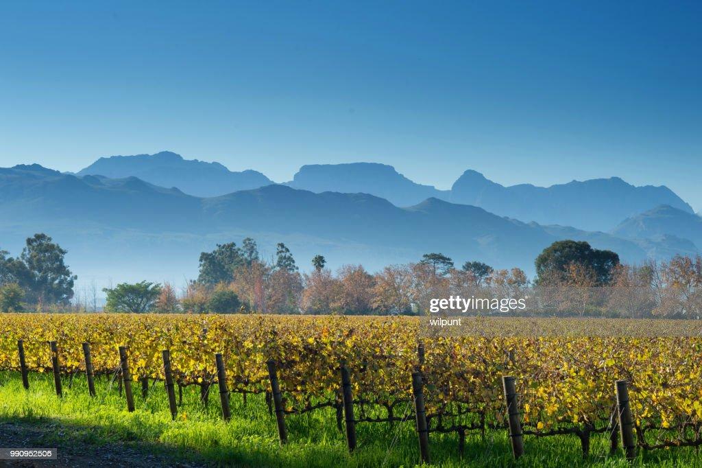 Autumn Cape Winelands Scene with mountains horizontal : Stock Photo
