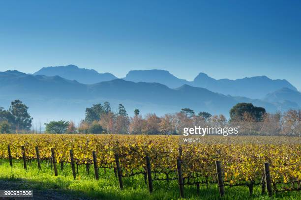 autumn cape winelands scene with mountains horizontal - constantia stock pictures, royalty-free photos & images