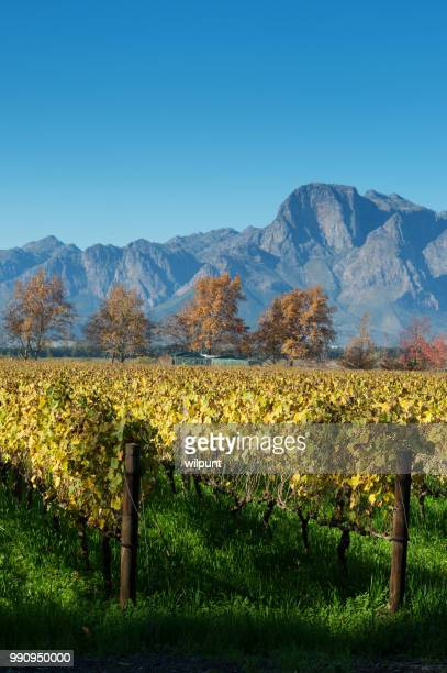 Autumn Cape Winelands Scene with mountains