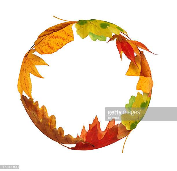 autumn circle - oak leaf stock pictures, royalty-free photos & images