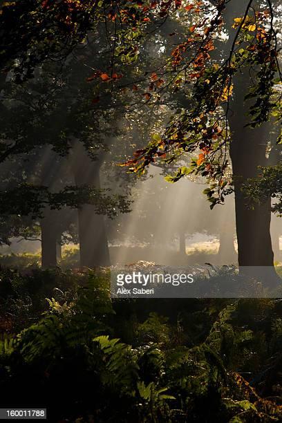 autumn color and a misty landscape with trees. - alex saberi fotografías e imágenes de stock