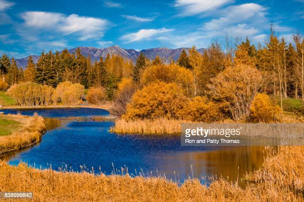 Autumn color in  Californian Sierra Nevada at Mammoth Lakes, CA