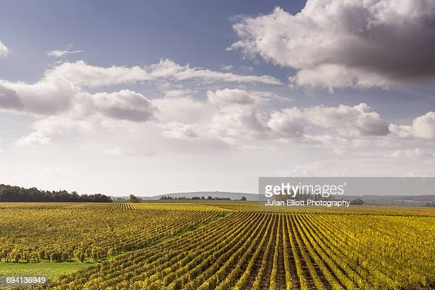 Autumn color in the vineyards of Pouilly-sur-Loire