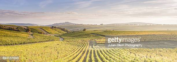 autumn color in the vineyards of sancerre, france. - cher stock pictures, royalty-free photos & images