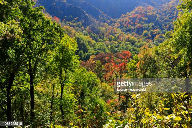 autumn color near chimney tops on newfound gap road, smoky mountains national park - newfound gap stock photos and pictures