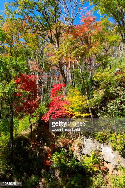 autumn color on newfound gap road, smoky mountains national park - newfound gap stock photos and pictures