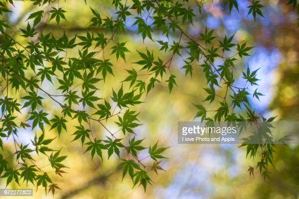 autumn color - novembro azul - fotografias e filmes do acervo