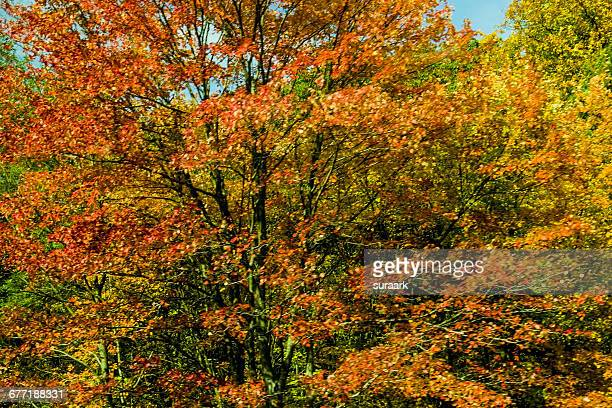 """""""autumn color series: red, orange & yellow"""" - grafton  massachusetts stock pictures, royalty-free photos & images"""