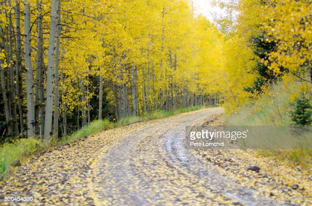 autumn Colorado sense