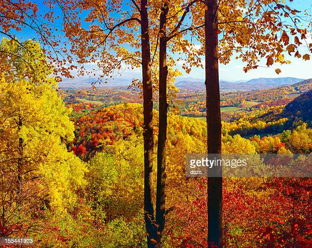 autumn colored foliage vista from the Blue Ridge Parkway Virginia