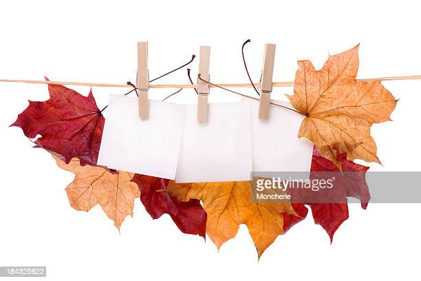 Autumn colored maple leaves hanging on clothes line