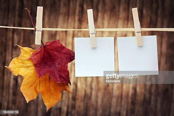 autumn colored maple leaves hanging on clothes line - clothespin stock pictures, royalty-free photos & images