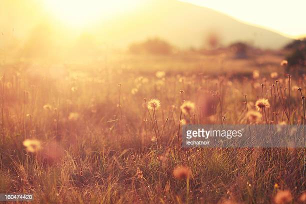 Herbst Farben Natur