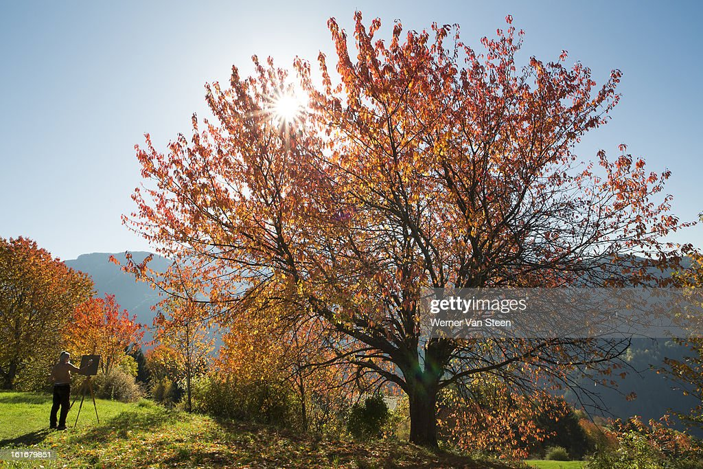 Autumn colored tree and artist : Stockfoto