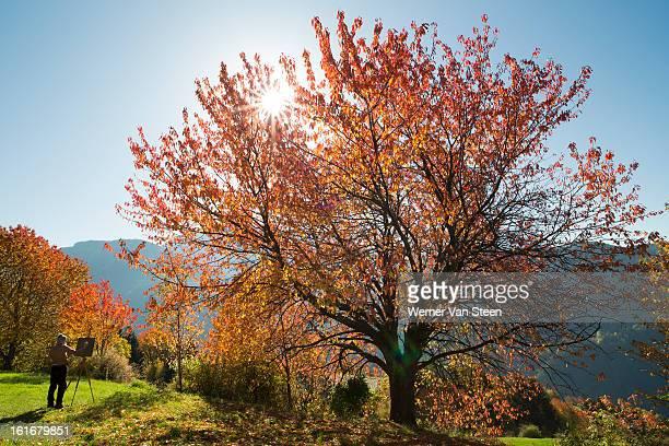 autumn colored tree and artist - nature stockfoto's en -beelden
