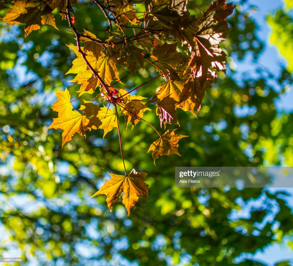 Autumn Colorful Leaves Of The Trees Stock Photo | Getty Images
