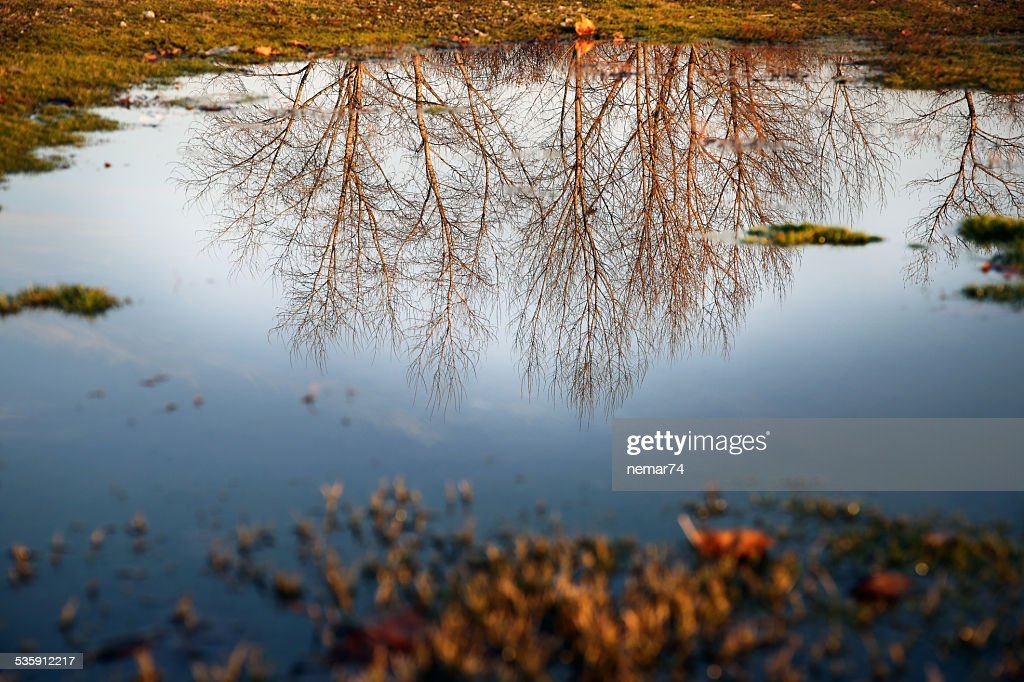 Autumn colorful trees reflected in the water : Stock Photo