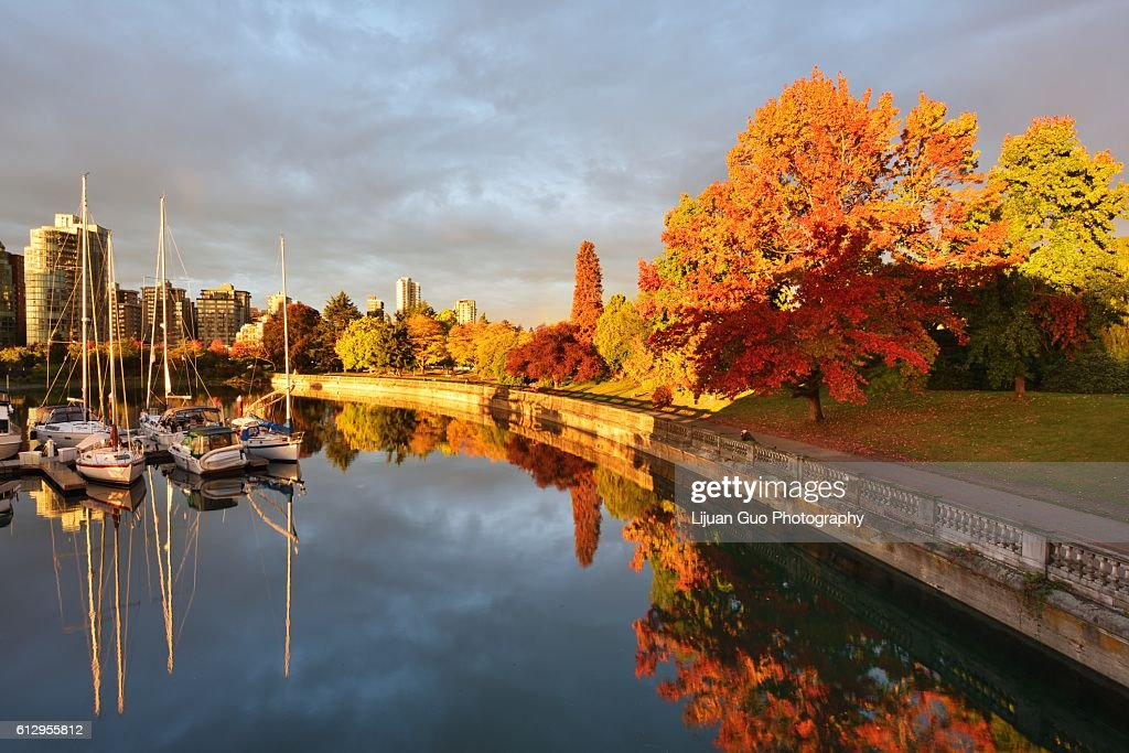 Autumn Colors alone the Sea Walk in Stanley Park, Vancouver, BC : Stock Photo