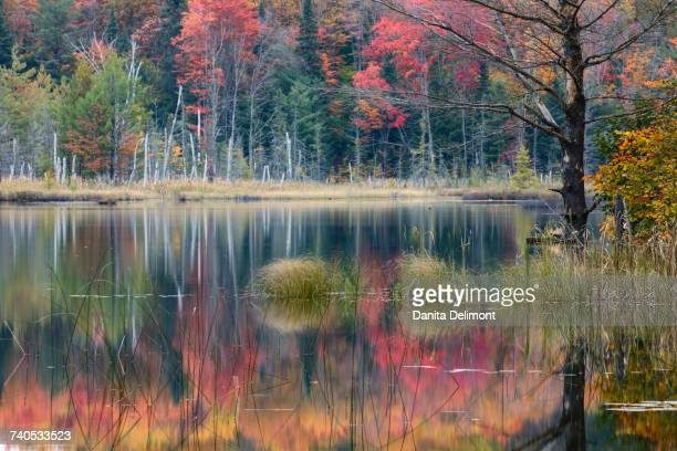 autumn colors and mist reflecting on council lake at sunrise, hiawatha national forest, michigan, usa - hiawatha national forest stock pictures, royalty-free photos & images