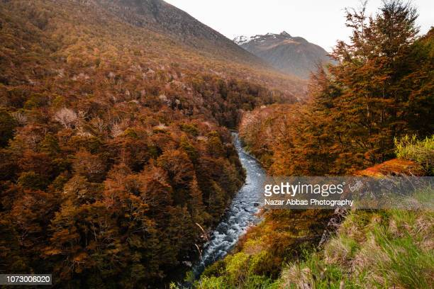 autumn colors and stream flowing through forest. - uncultivated stock pictures, royalty-free photos & images