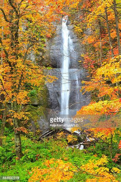 autumn colors, aomori prefecture, japan - bedrock stock pictures, royalty-free photos & images