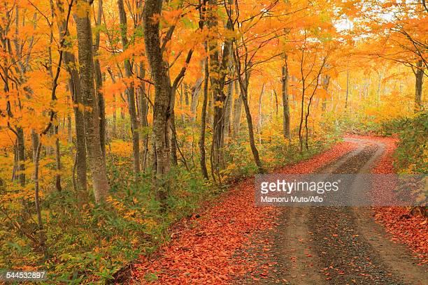 Autumn colors, Aomori Prefecture, Japan