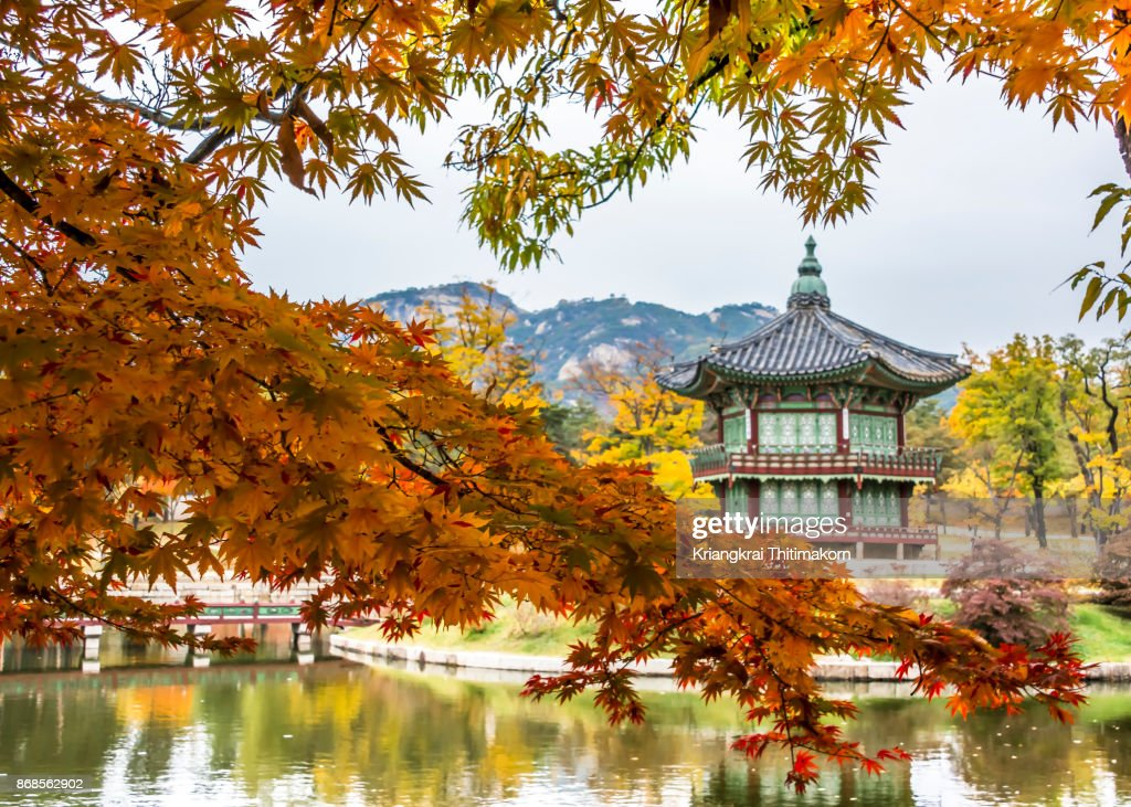 Autumn colors around Gyeongbokgung palace in South Korea. : Stock Photo