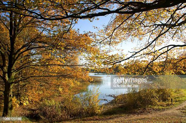 autumn colors.... blue and gold - drenthe stock pictures, royalty-free photos & images
