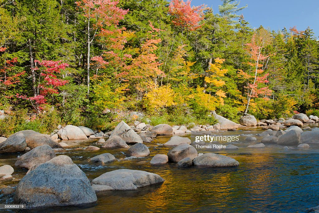 Autumn colors by the stream in the forest : Foto de stock
