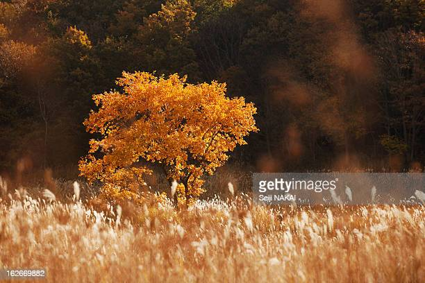 Autumn colors grasslands