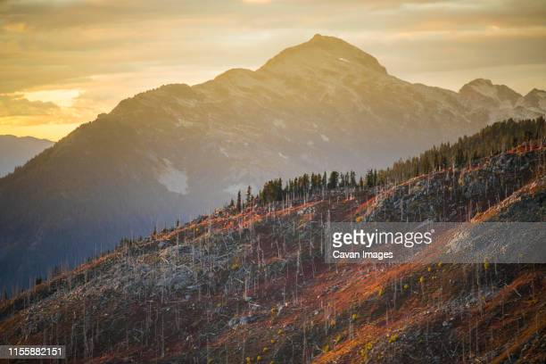 autumn colors illuminated by alpenglow on previously burnt mountain. - accidents and disasters photos stock photos and pictures