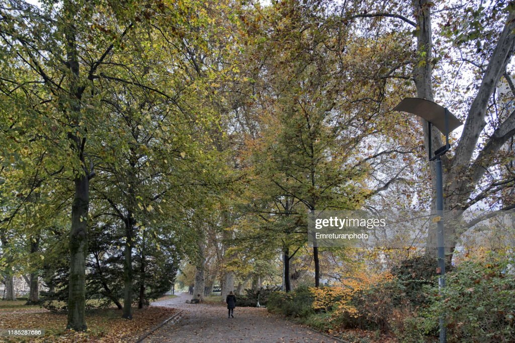 Autumn colors in a park with huge trees in a park in Zurich. : Stock Photo