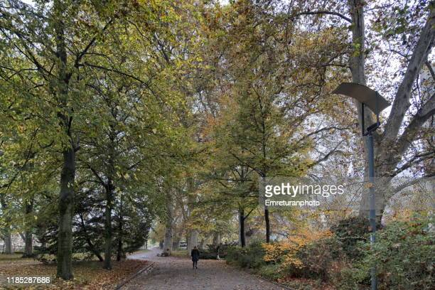 autumn colors in a park with huge trees in a park in zurich. - emreturanphoto stock pictures, royalty-free photos & images
