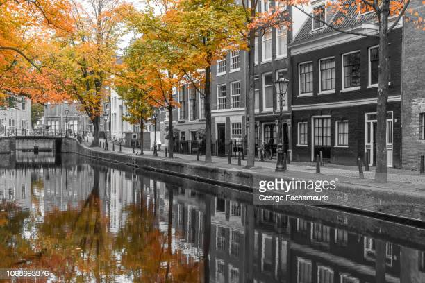 autumn colors in amsterdam - isolated color stock pictures, royalty-free photos & images