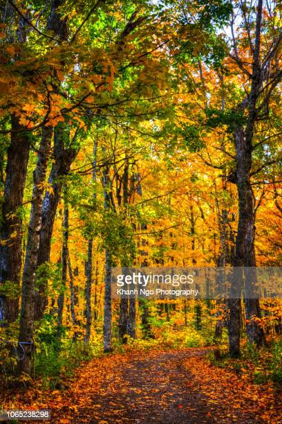 autumn colors in canada - khanh ngo stock pictures, royalty-free photos & images