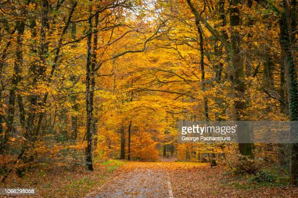 autumn colors in forest - gelderland stock pictures, royalty-free photos & images