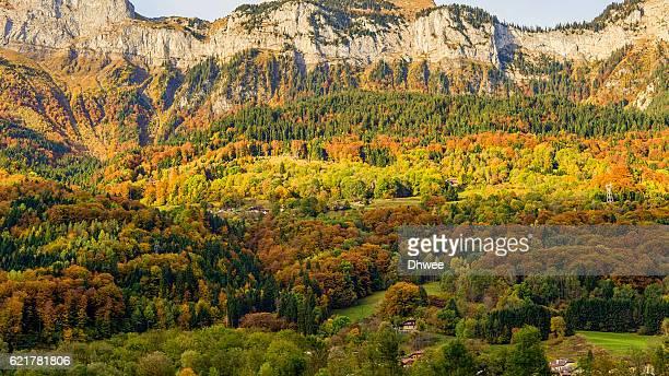 autumn colors in french alps, haute-savoie - foresta temperata foto e immagini stock